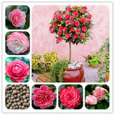 5Pc Camellia Flower Seeds 7 Types Decorative Tea Plant Garden Home Potted Bonsai