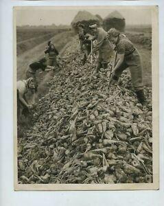 Land Army Women Stack Sugar Beet Lincolnshire 1940 Press Photo