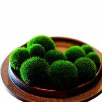 1pc Nano Marimo Moss Ball-algae Live Aquarium Plant Fish UKYQ Tank CL J4N0