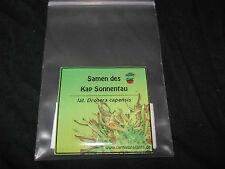 Fleischfressende Pflanzen 100 Drosera capensis Samen! - roter Kap Sonnentau
