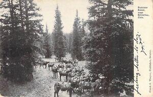 Summer Scene near Silverton, Colo, Posted 1910