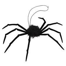 # Araignée Noir Horreur à fourrure animaux et Nature Tarentule