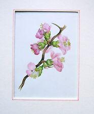 Sarah GOLDEN ALBUM (2) Apple Blossom SCUOLA INGLESE c1850