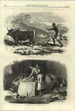 1868 Native Ploughing Two Oxen Abyssinia Woman Grinding Corn Tigre