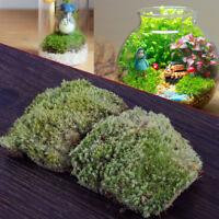 2X 10*8CM Natur Trockenes Dekomoos Garten Mikrolandschaft Miniatur Dry Moss NEU