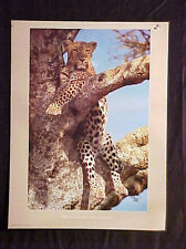 Leopard In A Tree Print