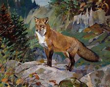 Rungius Carl Red Fox Canvas 16 x 20    #5563