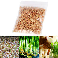 1oz/approx800 Seeds HARVESTED Cat Grass 100 Organic Including Growing Guide
