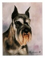 Grey Cropped Schnauzer Head Study 6 Note Cards & 6 Envelopes By Ruth Maystead