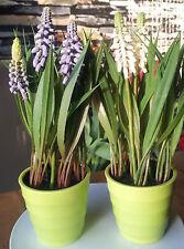 2x Kunstblume Muscari 21cm Traubenhyazinthe Kunstpflanze mit im Topf  Hyazinthe