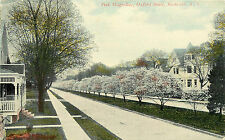 ROCHESTER NY OXFORD STREET PINK MAGNOLIAS 1912 P/C
