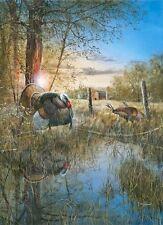 Jim Hansel Morning Ritual Wild Turkey Print   7.75 x 12