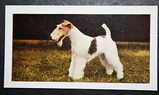 Fox Terrier   Wire    Vintage Colour Photo Card   Exc Condition