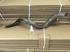 "Kudu Yemenite Horn Shofar Kosher Full Polished Approx 31"" judaica Gift Spray"