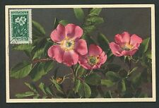 BULGARIA MK 1953 FLORA HUNDSROSE DOG ROSES MAXIMUMKARTE MAXIMUM CARD MC CM d6310