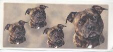Staffordshire Terrier Design Coffee Mug - choice of 17 Designs