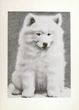Pencil Graphite Animals Us Art Drawings For Sale Ebay