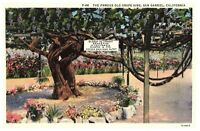 The Famous Old Grape Vine, San Gabriel, California CA Postcard 1A-H419