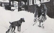 vintage 1930 /1940 era Photo Mom Airedale Irish Terrier dog & Dalmatian in Snow*