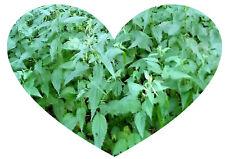 NETTLE TEA (20) Natural anti-inflammatory HERBAL Teabags immunity healthy blood