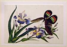 CHINESE SCHOOL A BUTTERFLY ON IRISES UNFRAMED ON RICEPAPER C1860