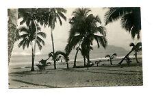 Vintage Postcard  RPPC Samoa OFU BEACH  palm trees