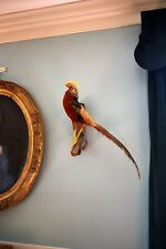 ANTIQUE GAME BIRD TAXIDERMY MOUNT OF A CHINESE GOLDEN RAINBOW PHEASANT ON STAND