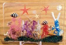 Tropical Florida ocean sun catcher beach art novelty sea shells paperweight ss69