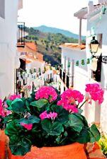 Frigiliana Andalusia Mediterranean Costa del Sol Spain Photograph Picture Print