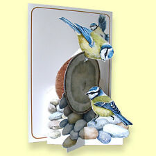 Pictoria Press Imported 3D Greeting Card - BLUE TIT BIRDS - #PIC-205