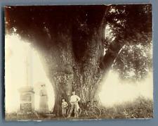 Midi-Pyrénées, arbre remarquable Vintage citrate print.  Tirage citrate  9x1