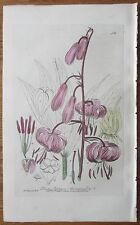 BAXTER: Handcolored Botanical Print Martagon Lily - 1835