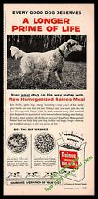 1956 English Setter Gaines Dog Food Vintage Photo Ad