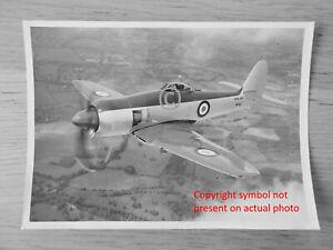 Hawker Sea Fury FB11 Original Official Photo of WF619