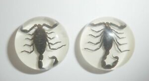 Insect Cabochon Black Scorpion Specimen Round 25 mm on White 2 pieces Lot