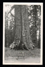 VTG UNUSED REAL PHOTO POSTCARD RPPC - GRIZZLY GIANT SEQUOIA TREE IN YOSEMITE CA