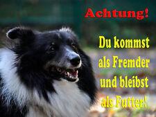 Sheltie  -Aluschild-Warnschild-Neu-Funschild