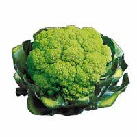 Suffolk Herbes-Concombre Beta Alpha F1-15 graines