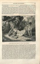 Le chien auprès d'un Héron Chasse par Jean-Baptiste Oudry Peintre GRAVURE 1851