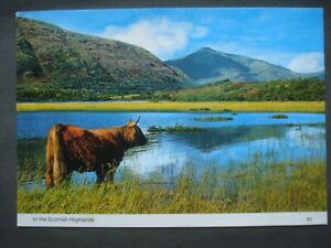 Vintage Used Colour Post Card In the Scottish Highlands