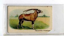 (Jb1963-100)  HUSTLER,ANIMALS 1ST SERIES,GEMSBOK ANTELOPE,1925#15