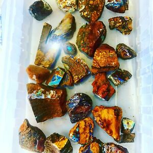 Australian Boulder Opal Rough assorted random 1 piece Petrified Wood with Opal