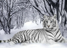 WHITE TIGER in SNOW  * QUALITY CANVAS  PRINT