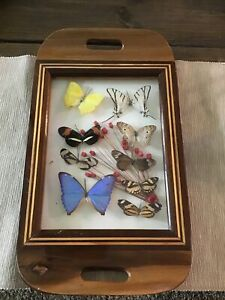 Vintage Wood & Glass Tray With Beautiful Butterflies