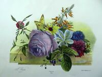 "1830 Desguerrois after Weiss (1801-1851); Large 15.5"" STILL LIFE ROSE hand col."