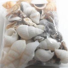 Mixed Sea Shells Beach Mix Shell Decor Wedding Ocean Aquarium NEW