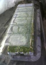 1 X PLASTIC POLY TUNNEL LID. FULL SIZE. PLANT & SEED PROTECTION.COLLECTION ONLY