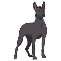 Xoloitzcuintli Dog Decal | Dog Lover D�cor Vinyl Sticker
