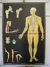 Schulwandkarte Wandkarte Wandbild Knochengerüst Skelett Knochen Gerüst 113x163cm
