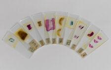10x Präparate fürs Mikroskop - histologisch - Niere Leber Gehirn Milz Lunge usw.
